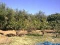 Vente terrain 44H région Sidi Bouatman Marrakech