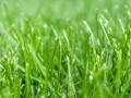 BRINIS TRAVAUX -Création et entretien des espaces verts-