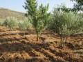 2 hectares agricole, 20000 m2, à vendre
