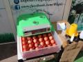 Incubateur pour 36 œufs