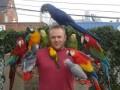 Autruches, Emu et perroquets